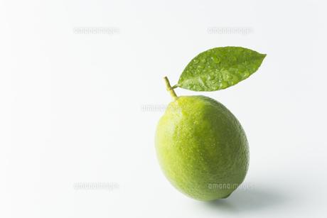 レモンの写真素材 [FYI00042659]