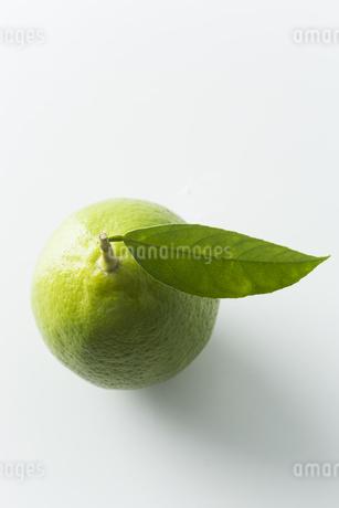 レモンの写真素材 [FYI00042662]