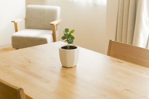 テーブルの上にある観葉植物の写真素材 [FYI00042663]