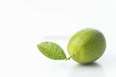 レモンの写真素材 [FYI00042669]