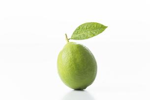 レモンの写真素材 [FYI00042670]