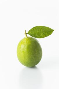 レモンの写真素材 [FYI00042671]