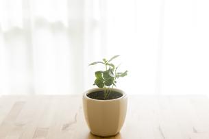 観葉植物の写真素材 [FYI00042745]