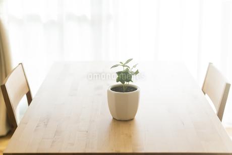 テーブルの上にある観葉植物の写真素材 [FYI00042750]