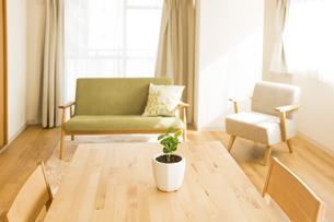 テーブルの上にある観葉植物の写真素材 [FYI00042753]