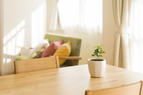 テーブルの上にある観葉植物の写真素材 [FYI00042754]