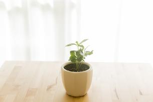 観葉植物の写真素材 [FYI00042759]
