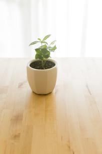 観葉植物の写真素材 [FYI00042760]