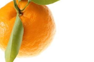 オレンジの素材 [FYI00042899]