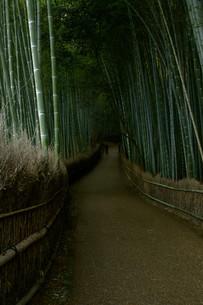 竹林の道の写真素材 [FYI00042901]