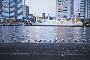 東京湾と並ぶ鳥の素材 [FYI00042914]