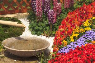 カラフルな花畑の素材 [FYI00042919]