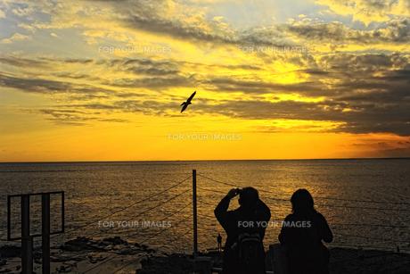 夕焼けの中でトンピを撮るカップルの素材 [FYI00042929]