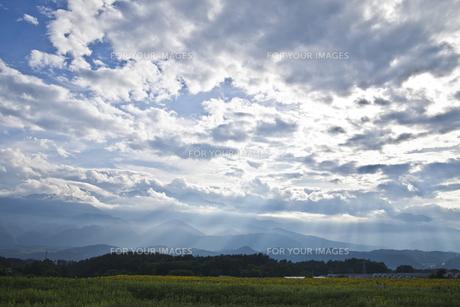 雲間から光が差し込むヒマワリ畑の素材 [FYI00042930]