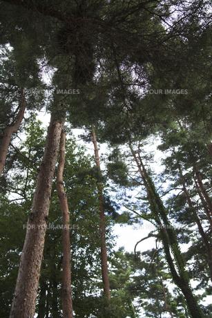 森林の素材 [FYI00042938]