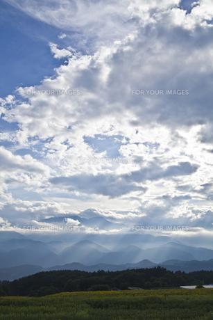 雲間から光が差し込むヒマワリ畑の素材 [FYI00042945]
