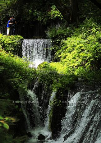 緑深き滝の風景の素材 [FYI00042946]