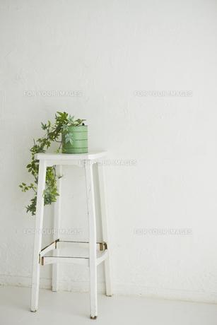 室内にある緑のインテリアの素材 [FYI00042952]