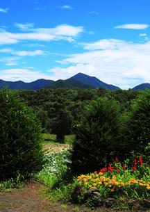 青空と山々を望む庭園の素材 [FYI00042956]