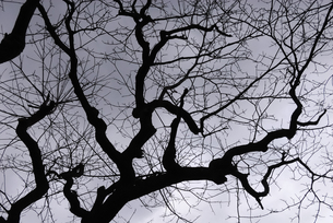 冬枯れの写真素材 [FYI00042988]