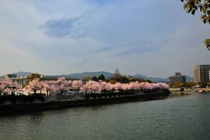 平和公園の桜の素材 [FYI00043150]