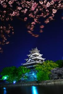 広島城の夜桜の素材 [FYI00043165]