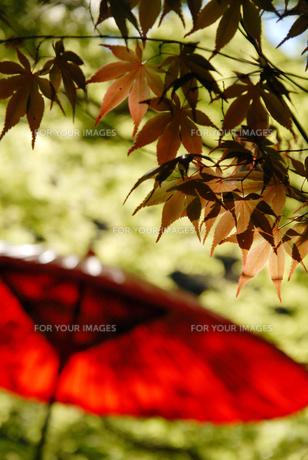 赤い和傘の写真素材 [FYI00043261]