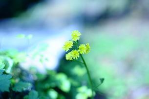 春色の写真素材 [FYI00043337]