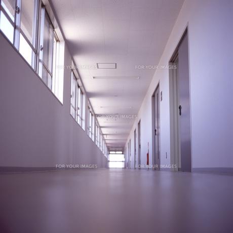 学校の廊下の素材 [FYI00043728]