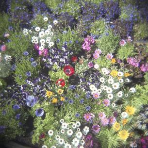 カラフルな花壇の素材 [FYI00043799]