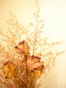 Rose Dry Flowersの写真素材 [FYI00044042]