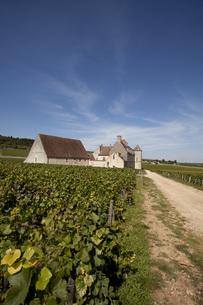 フランスのブドウ畑の写真素材 [FYI00044274]