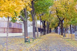 秋のウィーンの並木道の写真素材 [FYI00044278]