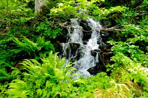 森の中の小さな瀧の写真素材 [FYI00044467]