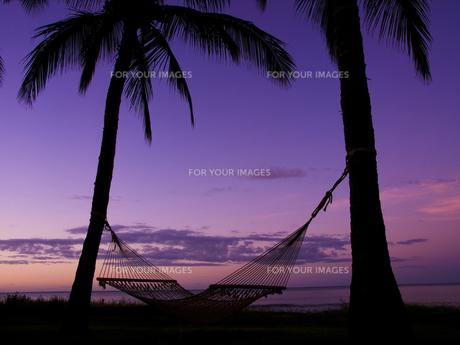 ハワイ州カウアイ島の夜明けとハンモックの写真素材 [FYI00044524]