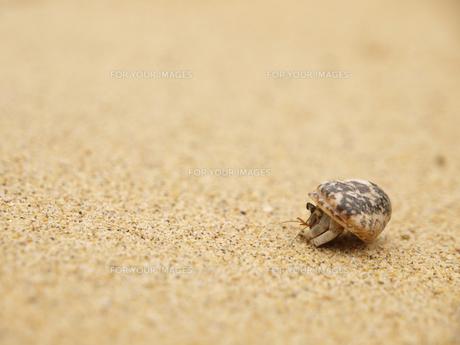ヤドカリと白砂の写真素材 [FYI00044535]