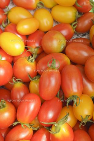 一面に広げられたトマト(アイコ)の素材 [FYI00044716]
