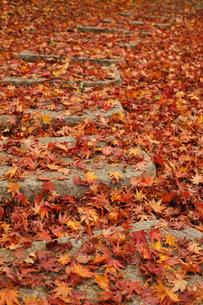 一面の落葉の素材 [FYI00044760]