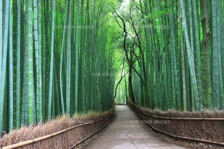 竹林の素材 [FYI00045074]