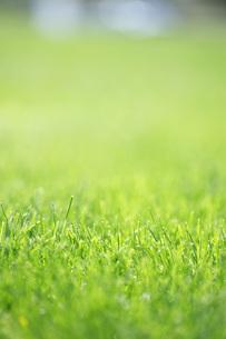 芝生の写真素材 [FYI00045497]