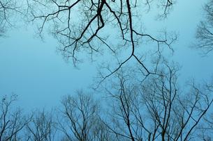 枝の写真素材 [FYI00045623]