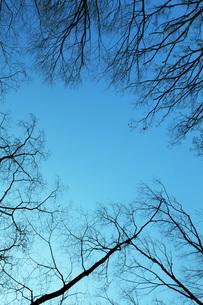 枝の写真素材 [FYI00045628]