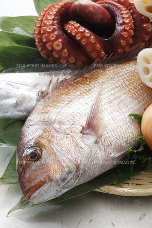 食材の写真素材 [FYI00045667]