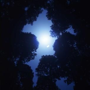 木々からのぞく月明かりの写真素材 [FYI00045900]
