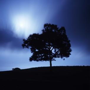 夜の牧場の月明かりと木の写真素材 [FYI00045916]