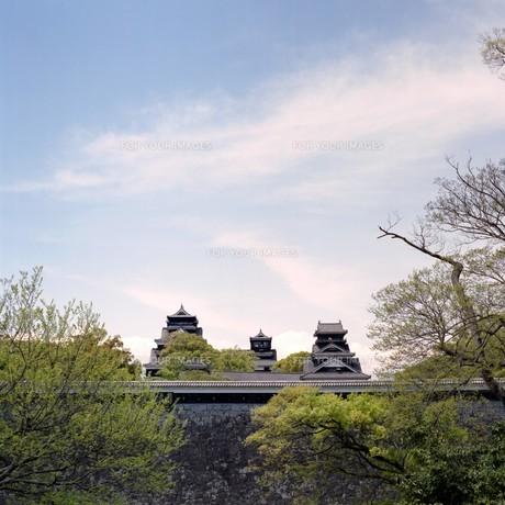 二の丸公園からみた熊本城の写真素材 [FYI00045962]