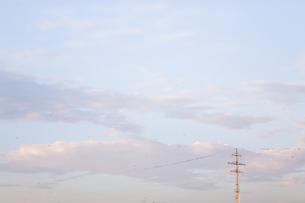 夕方 電線 鳥の写真素材 [FYI00046000]