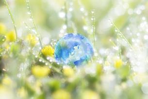 エコロジーの写真素材 [FYI00046346]