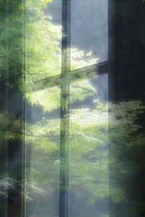新緑の窓の写真素材 [FYI00046571]