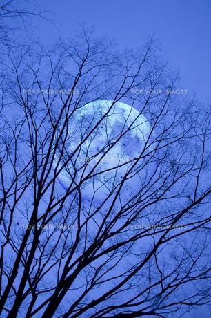 樹影の写真素材 [FYI00046687]
